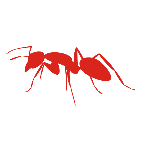 mrówka - dezynsekcja